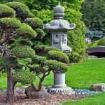 Вечнозелёные кустарники фото и названия