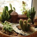 Міні сад в горщику своїми руками фото