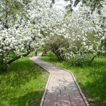 Яблоневый сад фото
