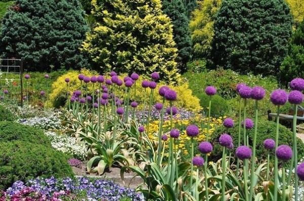Аллярий - декоративные луки в дизайне сада
