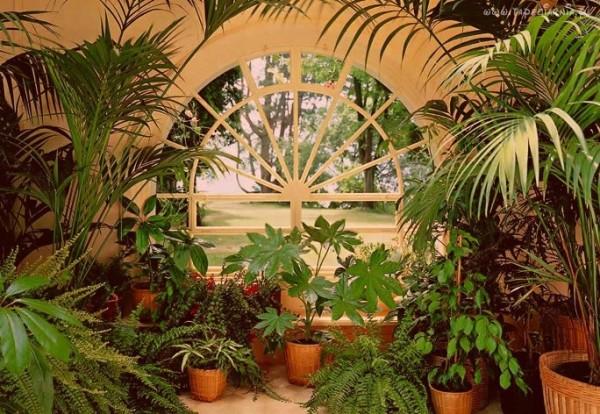 Балконные садоводы рекомендуют сразу выделять место для высоких цветков
