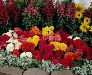 Бегония - растение, которое насчитывает около 1200 сортов и гибридов