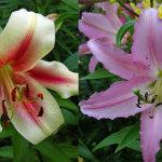 Богатая гамма цветов и оттенков