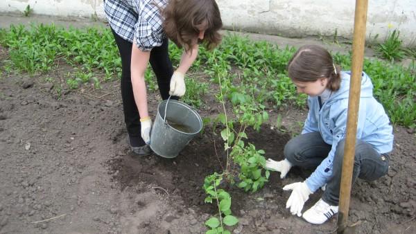 Чем моложе растение, тем меньше воды ему требуется