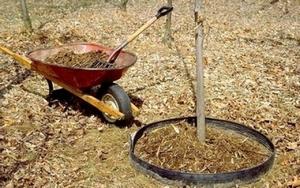 Чтобы удобрения не разнесло по участку, сделайте небольшие «оградки» у кустов и деревьев