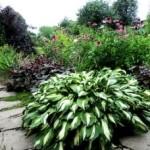 багаторічна рослина