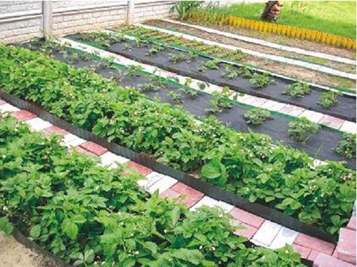 Дачный участок – это не только ухоженный огород!