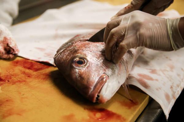 Даже рыбьи головы в руках опытного дачника способны принести пользу