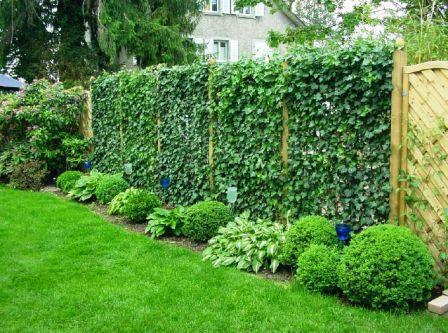 Декорирование изгороди