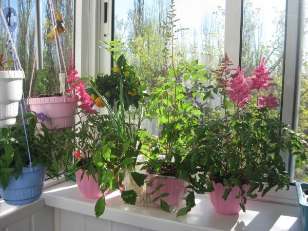 Для хорошего роста цветов необходимо создать на балконе подходящие условия