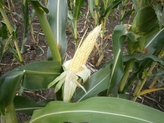 Для выращивания продуктов используют химические препараты
