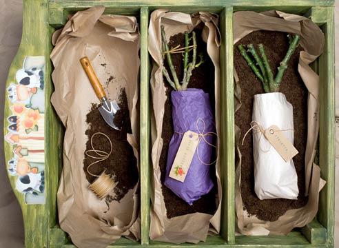 Если вам требуется хранение саженцев, не используйте полиэтилен, так как устроить розарий из растений с подопревшими корнями невозможно