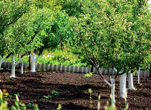 Фото фруктовых деревьев, расположенных друг от друга на точно выверенном расстоянии