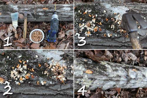 Инструкция по выращиванию грибов в деревянных чурках