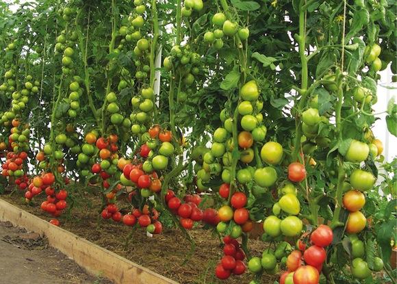Использование органического земледелия уменьшает трудозатраты
