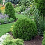 Вечнозеленые кустарники фото с названиями