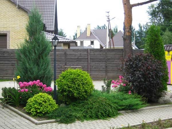 Как выглядят композиции с хвойниками в саду