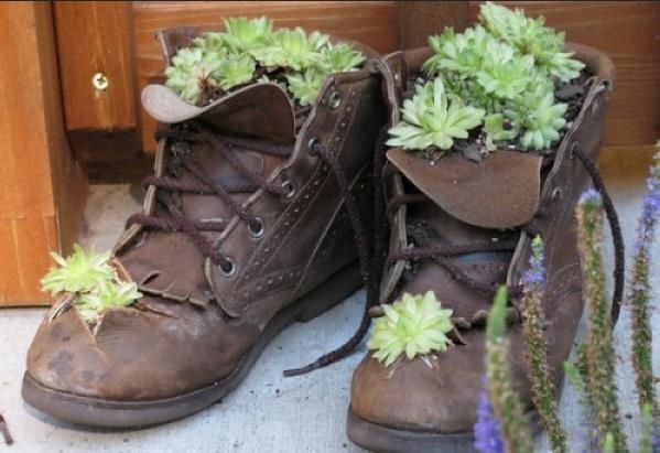 Кактусы в старых ботинках
