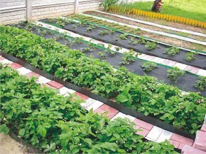 Каждое растение имеет свои особенности посадки