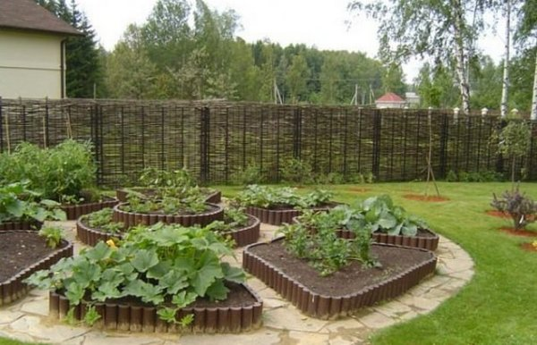 Кто сказал, что на клумбе должны расти цветы, а не овощи?