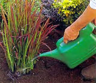 Лейка без рассеивателя используется только для крупных кустов или деревьев