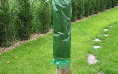 Ловчий пояс способен защитить ствол дерева от вредителей и их личинок