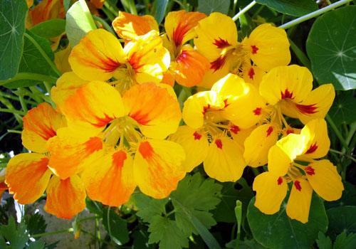 Цветы в саду