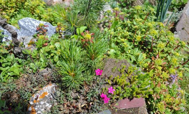 Муравейник посреди клумбы портит её внешний вид и несёт опасность посаженному растению
