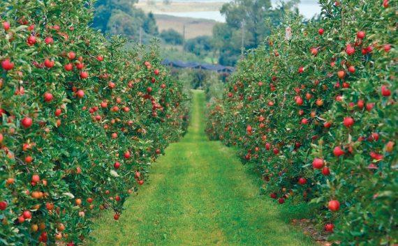 На фото показано успешно развивающееся садовое хозяйство.