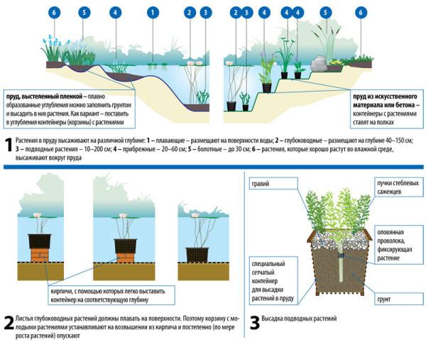 На схеме показаны варианты высадки растений на разной глубине