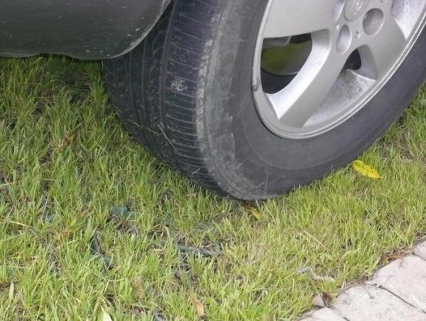 Неплохой вариант – обычная газонная трава