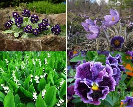 Низкорослые многолетники - отличные садовые цветы для Сибири