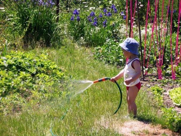 Обильный полив - вот чего требуют растения в засушливую летнюю погоду