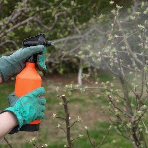 Обработка кустарников от вредителей и болезней