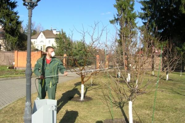 Обработка сада от вредителей.