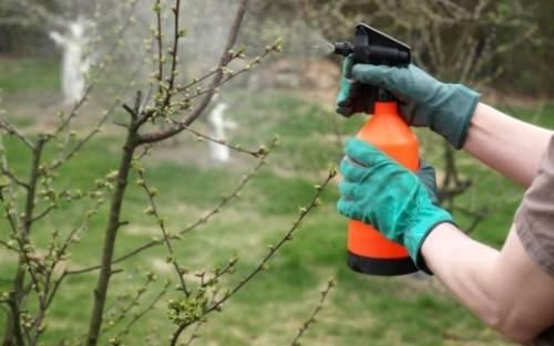 Опрыскивание растительности гербицидами