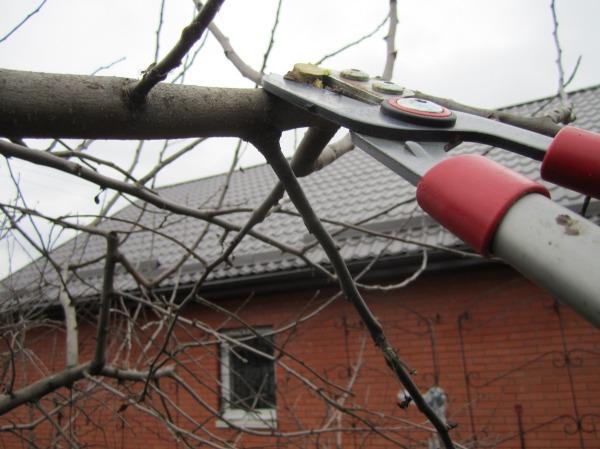 Осенняя расчистка готовит дерево к зимовке