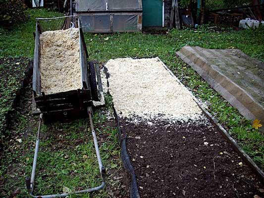 Подготовка грядок под садовую землянику