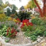 Багаторічники в саду