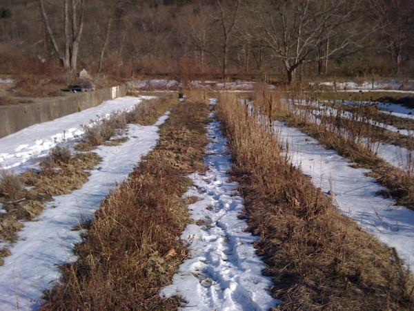 При возможности большие сугробы, которые располагаются в тени строений, лучше раскидать по участку, чтобы дополнительно увлажнить почву