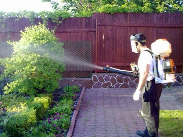 Применение медного купороса в садоводстве от вредителей