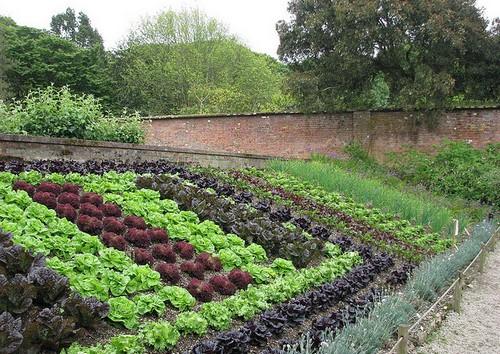Пример рациональной посадки овощей на небольшом участке