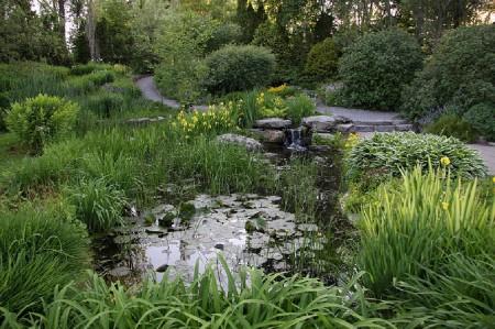 Пример симпатичного болотца