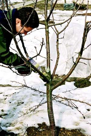 Проведите осмотр деревьев