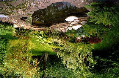 Растения для водоема на даче должны получать свою норму света