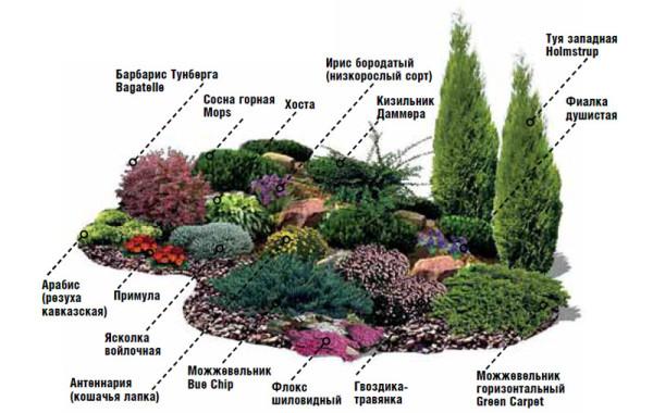 Рекомендуемые виды растений