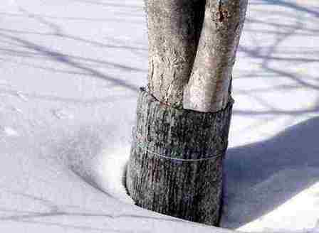 Рубероидная подвязка на зиму