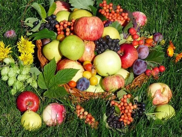 Сад отблагодарит вас за ваши труды хорошим урожаем