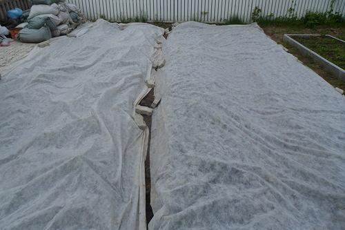 Садовую землянику следует укрывать специальной пленкой, чтобы защитить ее на момент прорастания