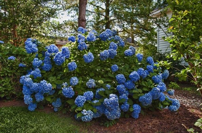 Цветущие многолетники для сада фото